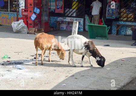 Two goats looking for rest of food in a village on the road from Mombassa to Nairobi - Stock Photo