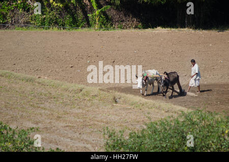 An unidentified Indian Farmer in the field. - Stock Photo