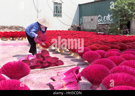 Worker preparing  purple & red bamboo sticks for incense application. - Stock Photo