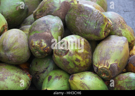 Pile of natural green ripe coconuts ready to eat & drink, Cartagena, Colombia. - Stock Photo