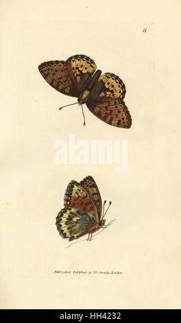 Dark green fritillary, Argynnis aglaia (Charlotte butterfly, Papilio charlotta). Handcoloured copperplate engraving - Stock Photo