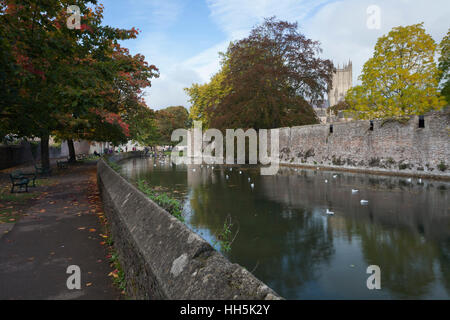 A hint of autumn beside the moat of the Bishops Palace at Wells with Wells Cathedral in the background, Wells, Somerset, - Stock Photo