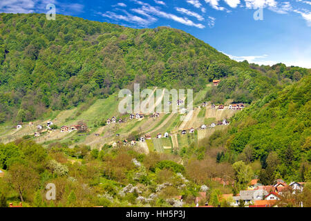 Pictoresque vineyard hill in Zagorje, green region of Croatia - Stock Photo