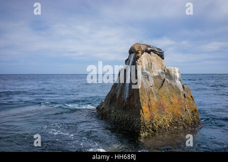 Seal or sea lion sleeping on the rock at Land's End, near the famous arch in Cabo San Lucas, Mexico. - Stock Photo