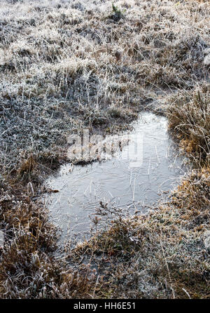 Ice patterns on the surface of a frozen pond in the New Forest Hampshire, Winter 2016 - Stock Photo