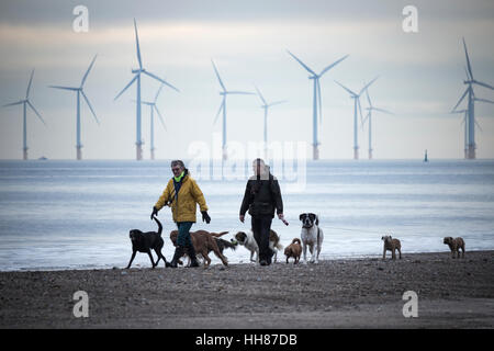 Dog walkers Seaton Carew beach. UK. Teesside Offshore Wind Farm in distance. - Stock Photo