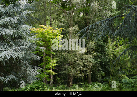 tree, trees, park, woods, woodland, forest, leaf, environment, enviroment, - Stock Photo