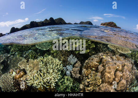 A beautiful coral reef thrives in Raja Ampat, Indonesia. This biodiverse region is known as the heart of the Coral - Stock Photo