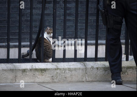 Downing Street, London, UK. 17th January 2017. Larry the Downing Street cat outside No 10 railings - Stock Photo