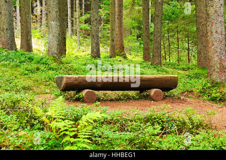 Bench on forest edge, near Campo Tures, Italy - Stock Photo