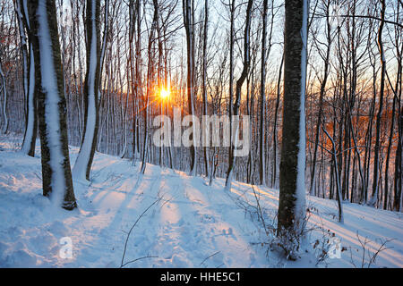 Sun in snow cowered forest - Stock Photo
