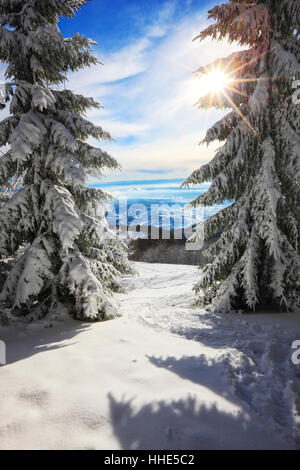 Snow covered pine trees in winter, Croatia - Stock Photo