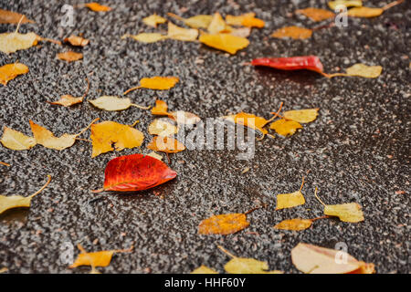 Sketches from the autumn yellow leaves. - Stock Photo