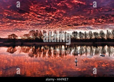 Peterborough, UK. 18th January 2017. The sky looked on fire this morning, as it made the clouds glow red, as swans - Stock Photo