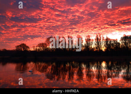 Peterborough, UK. 18th January 2017. The sky looked on fire this morning, as it made the clouds glow red, as a swan - Stock Photo