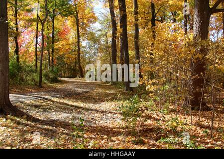 The autumn leaves on the trail in the park. - Stock Photo
