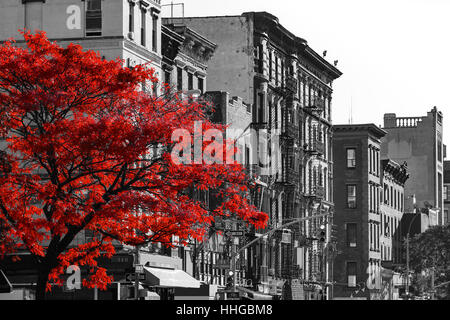 Red fall tree in black and white nyc street scene on 2nd avenue in the east