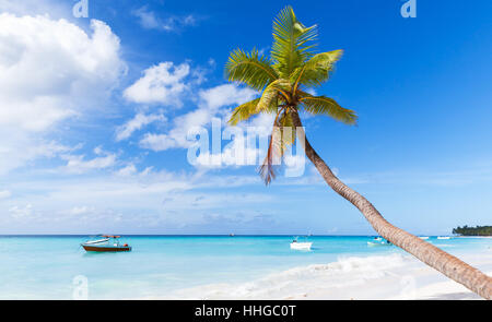 Coconut palm grows on white sandy beach of Saona island. Caribbean Sea coast, Dominican republic - Stock Photo