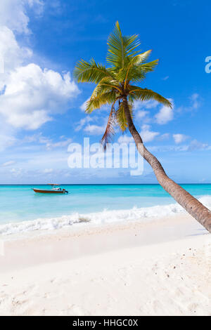 Coconut palm grows on white sandy beach. Caribbean Sea coast, Dominican republic, Saona island - Stock Photo