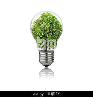 Light bulb with tree inside isolated on white background - Stock Photo