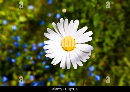 beautiful, beauteously, nice, awakening, meadow, backdrop, background, beauty, - Stock Photo