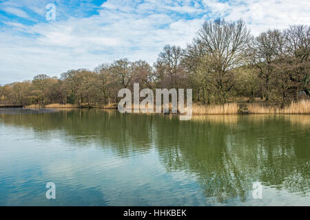 Cannop Ponds in the Forest of Dean Gloucestershire on a sunny morning in early Spring - Stock Photo