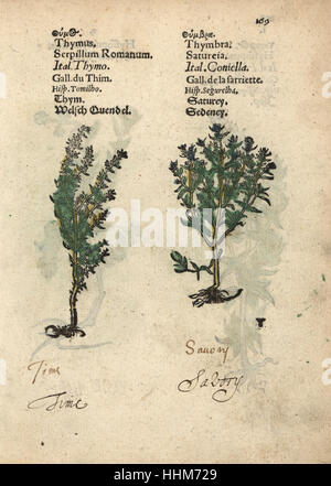 Common thyme, Thymus vulgaris, and summer savory, Satureja hortensis. Handcoloured woodblock engraving of a botanical - Stock Photo