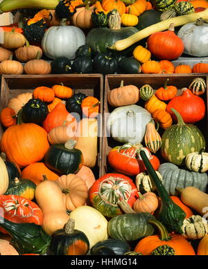 selection of various types of gourds, squashes and pumpkins in wooden boxes - Stock Photo