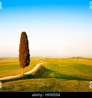 Tuscany, lonely cypress tree and white rural road on sunset. Siena, Orcia Valley, Italy, Europe. - Stock Photo