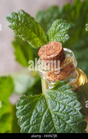 Aromatic oils Lemon balm in a glass bottle with fresh leaves macro vertical - Stock Photo