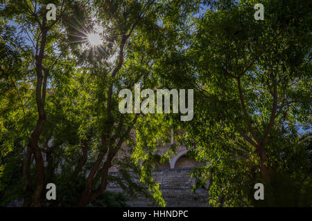 sun shining through leaves and tree on summers day with traditional building - Stock Photo