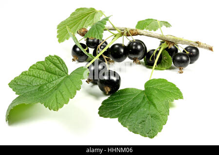 blackcurrants isolated on white background - Stock Photo