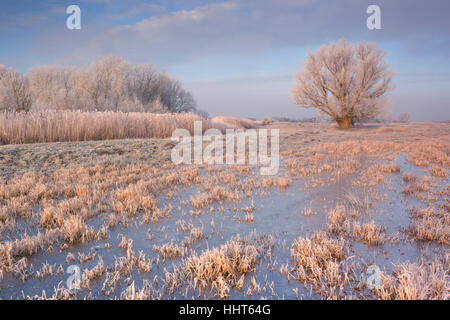 A frozen landscape just north of Amsterdam in The Netherlands photographed in early morning sunlight. - Stock Photo