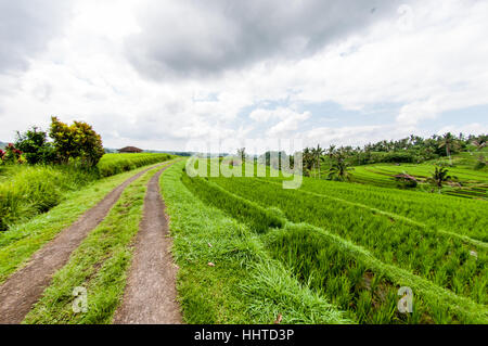 View of the rice terraces,  jatiluwih rice terrace, Bali, Indonesia - Stock Photo