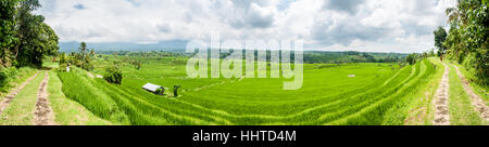 Panoramic View of the rice terraces, jatiluwih rice terrace, Bali, Indonesia - Stock Photo