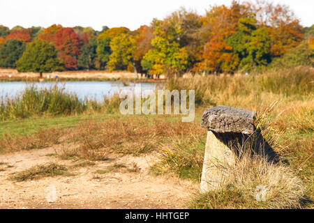 Weathered wooden bench next to Pen Ponds in Richmond Park, London - Stock Photo