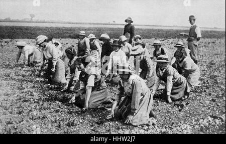 Land girls at work on a farm. First World War, 1916 - Stock Photo