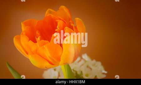 A fresh beautiful yellow flower - Stock Photo