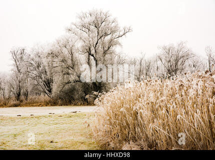 Foggy winter scenic with frosted trees in a landscape conservation area called Goachat near Schrobenhausen (Bavaria, - Stock Photo