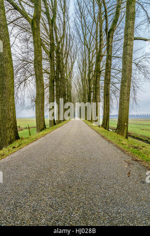 Endless road four - Stock Photo