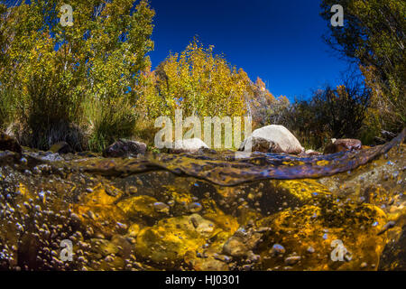 Split above water and underwater view of Lehman Creek in autumn at Lower Lehman Creek Campground in Great Basin - Stock Photo