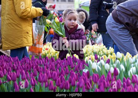 Amsterdam, Netherlands. 21st Jan, 2017. A girl holds tulips during the 2017 Dutch National Tulip Day in Amsterdam, - Stock Photo
