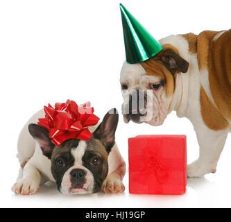 present, sweet, isolated, colour, joke, space, animal, pet, hat, celebrate, - Stock Photo