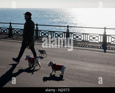 Winter sunshine and dog walking on Hove Sea front - Stock Photo