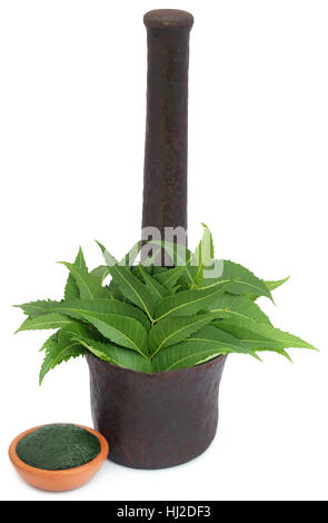 how to make neem leaf insecticide