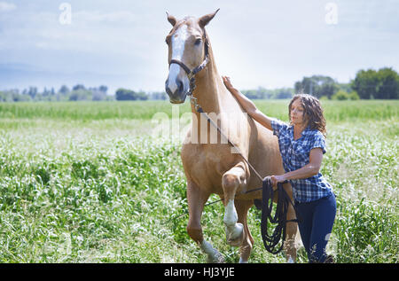 Woman training her horse at paddock - Stock Photo