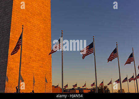 American flags stand in US capital at sunset. - Stock Photo