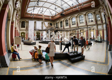 Berlin. Germany. Museum für Naturkunde, visitors in the Dinosaur Hall with the skeleton of Diplodocus carnegiei - Stock Photo