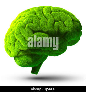 model, design, project, concept, plan, draft, growth, brain, mind, meadow, - Stock Photo