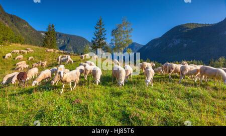 Alpine pastures in the Slovenian Alps. Triglav National Park. - Stock Photo